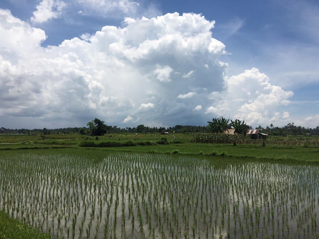 bali-rice-fields-nov-2016