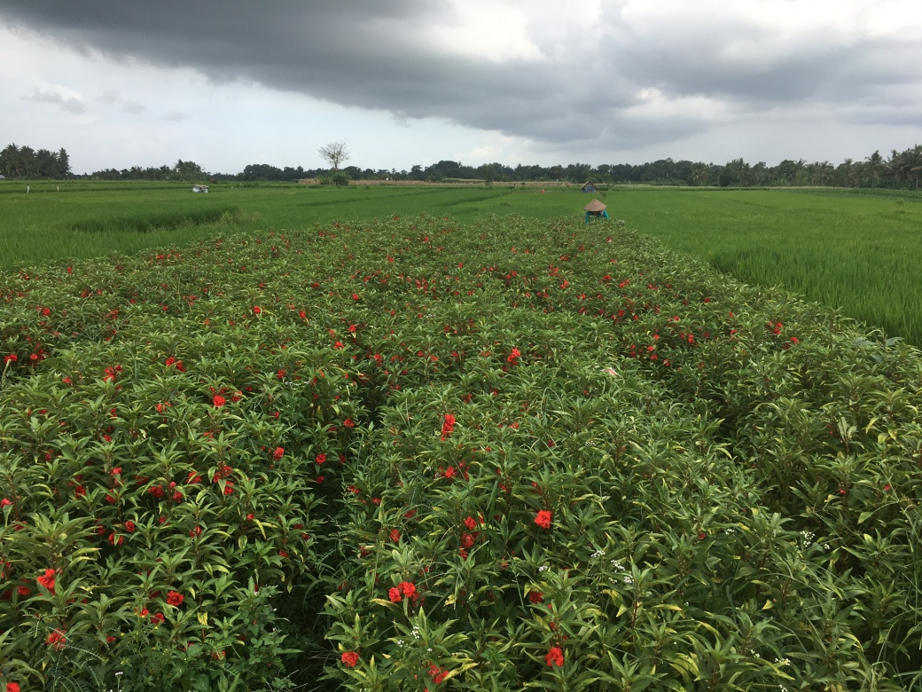 bali_ricefields_redflowers2016