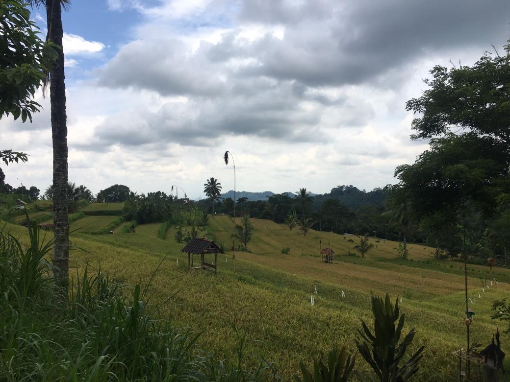 Bali_terraces_falls_Nov2016.jpg