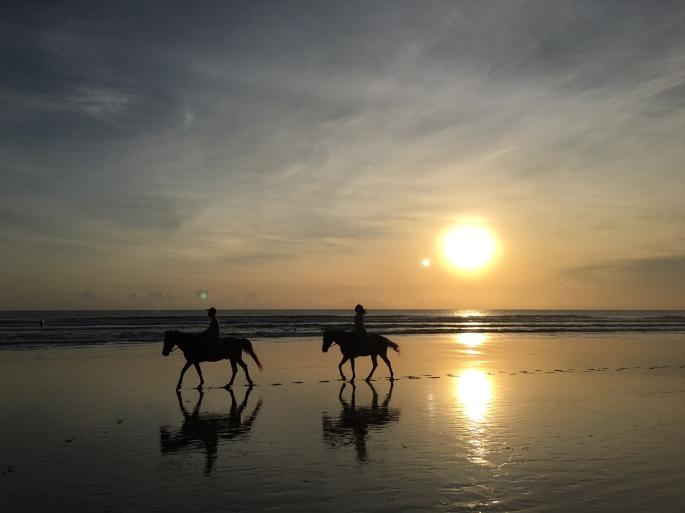 bali_horses2