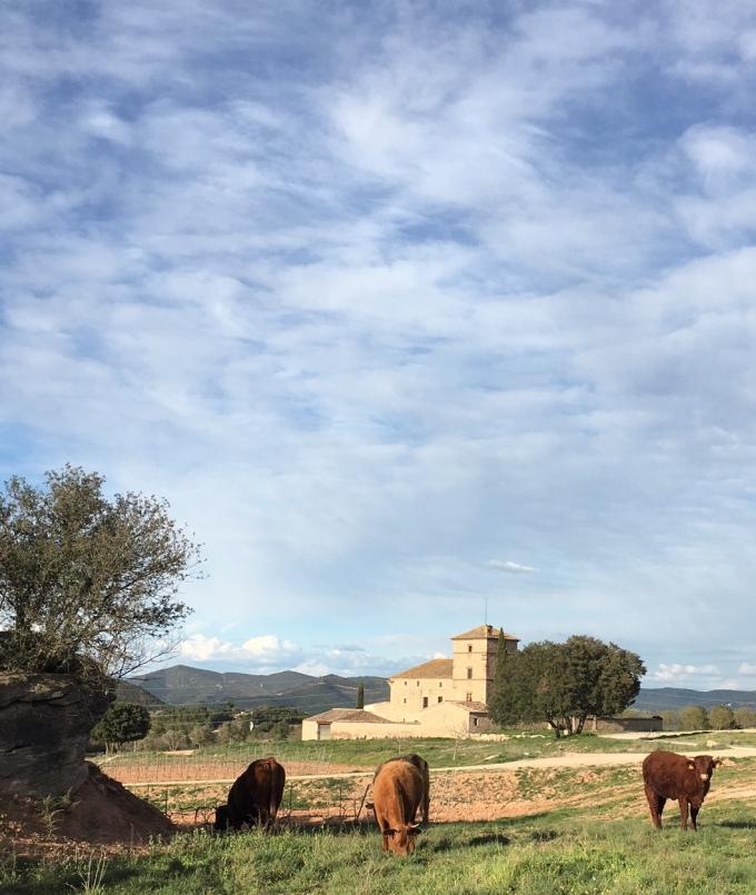 Spain1Bulls