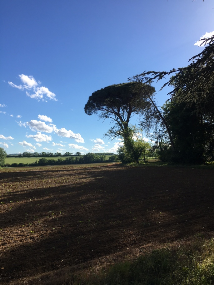 fr1_farmlandTree