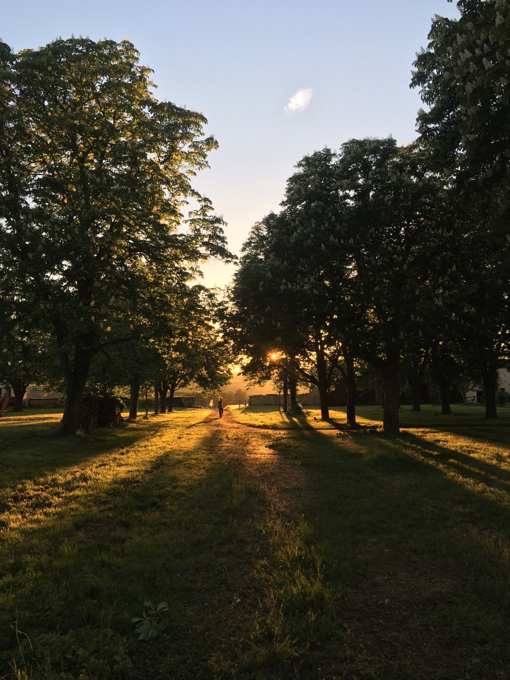 fr1_sunsetnice